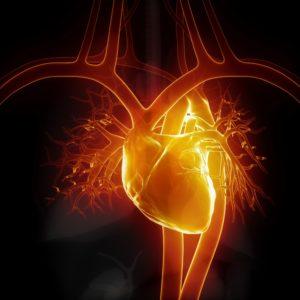 arritmias cardíacas, Divisão de Fibrilação Atrial, Abreu Cardiologia